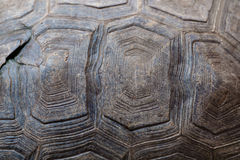 Turtle carapace. Stock Photography
