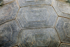 Turtle carapace. Royalty Free Stock Photo