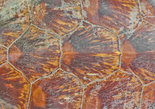 Turtle carapace Background. Details on the turtle carapace Background Stock Photo
