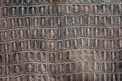 Turtle carapace pattern Royalty Free Stock Photo