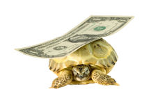 Turtle carrying a dollar banknote. (isolated on white Royalty Free Stock Photo
