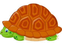 Turtle cartoon hiding in his shell Royalty Free Stock Photography