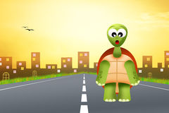 Turtle cartoon Stock Photography