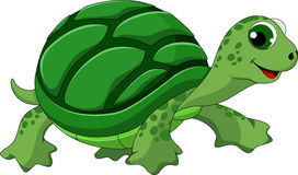 Turtle cartoon. Turtle pretty funny and adorable Stock Images