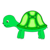 Turtle character vector. Turtle character green cute color Stock Images