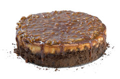 Turtle cheesecake Royalty Free Stock Photo