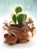 Turtle. Clay turtle-pot with a cactus on a light background Stock Images