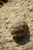 Turtle climbing dirt pile Royalty Free Stock Photo