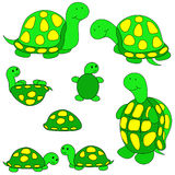Turtle clip-art. Stock Photo