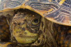Turtle Close Up Stock Image
