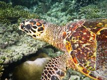 Turtle close up view Stock Photography