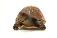 Turtle Closeup Stock Photos