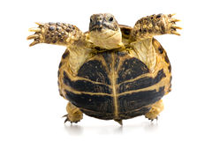 Turtle closeup view from below Royalty Free Stock Photos