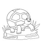 Turtle coloring page Royalty Free Stock Images
