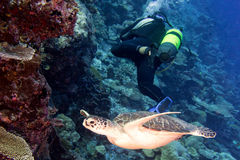 Turtle coming to you underwater Royalty Free Stock Image