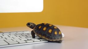 Turtle on computer with keyboard and wireless mouse, slow internet