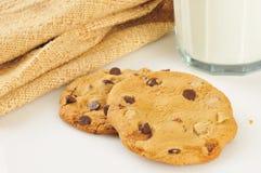 Turtle cookies Stock Image