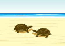 Turtle. Royalty Free Stock Images