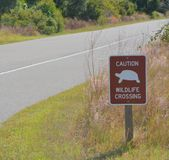 Turtle crossing in Big Talbot Island State Park, Duval County, Florida. Turtle crossing in Big Talbot Island State Park, Duval County, Florida stock photography
