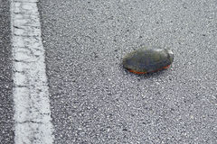 Turtle crossing a road Stock Photo