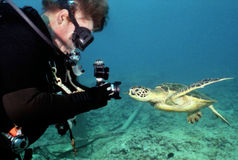 Turtle Curiosity - Underwater Photographer. Close encounter! A young green sea turtle swims up close to an underwater photographer's camera and sees a resembling Stock Photo
