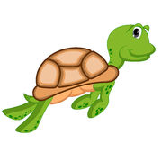 Turtle with cute pose Royalty Free Stock Photo