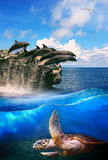 Turtle in deep sea dolphin junping and sea gull flying above use stock photo