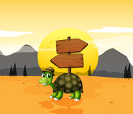 A turtle in the desert near the arrowboards Royalty Free Stock Image