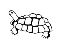 Turtle design clip art. Turtle tortoise reptile shell sea water aqua animal nature life clip art Stock Photography