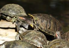 Turtle detail Stock Photo