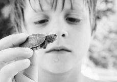 Turtle discovery. Black and white photo of a little boy discovering a baby turtle royalty free stock images