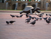 Turtle Doves. Turtle statue with pigeons in foreground in boston park stock images