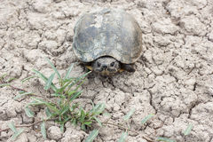 Turtle. A turtle on dry soil Stock Photo
