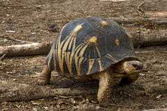 Turtle in earth Royalty Free Stock Photos