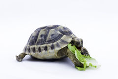 Turtle eating Stock Photos