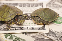 Turtle economy Royalty Free Stock Photos