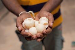 Turtle eggs Stock Image