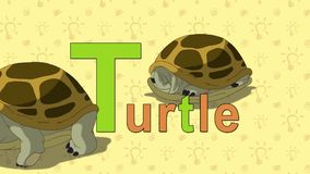Turtle. English ZOO Alphabet - letter T stock video