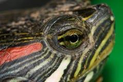 The turtle eye. A turtle eye macro image Royalty Free Stock Photo