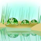 Turtle Family Stock Photos