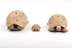 Turtle family Stock Images