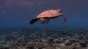 Turtle stock video