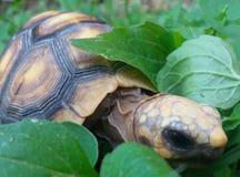 Turtle among the flora. Among the grass stock photo