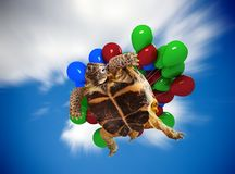 Turtle flying on balloons Stock Photography