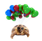 Turtle flying on balloons Stock Photos
