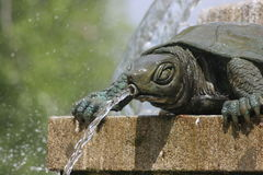 A turtle in a fountain Royalty Free Stock Image