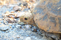 Turtle. The giant tortoise on the ground Stock Image
