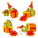 Turtle and gift Stock Photos