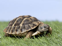 Turtle on grass stock photos