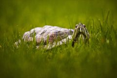 Turtle in the grass Royalty Free Stock Photos